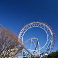 Photos: 後楽園ブル-
