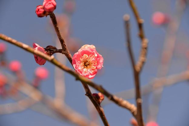 Photos: 春近し?