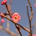 写真: 春近し?