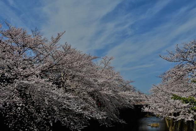 石神井川散歩