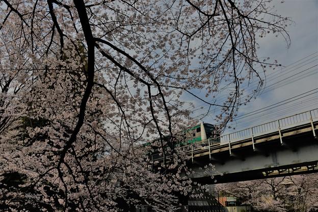 桜と・・・