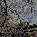 写真: 桜と・・・