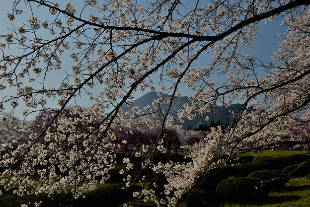 Photos: 秩父日和(2018春)