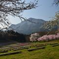 写真: 秩父の春