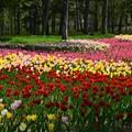 写真: 春は駆け足