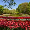写真: 昭和記念公園(2018春)