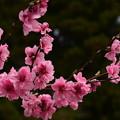 写真: 『恋に夢中』