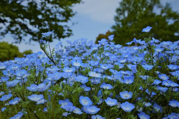 写真: 笑顔の花園