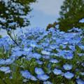 Photos: 笑顔の花園