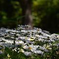 小さな花園