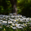 写真: 小さな花園