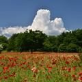 Photos: 初夏の公園?