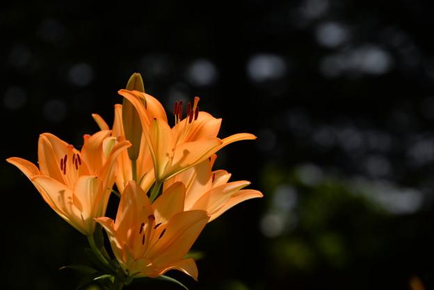 写真: オレンジ輝く