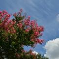 写真: 真夏日に咲く