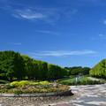 写真: 猛暑日の公園