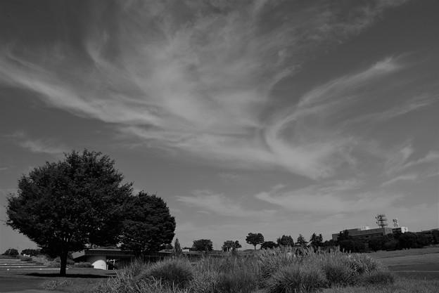 猛暑日の公園(モノクロ)
