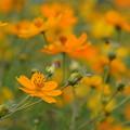 写真: オレンジ