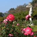 写真: 薔薇日和