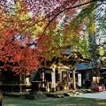 写真: 宝登山神社(2018秋)