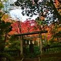 Photos: 東郷神社