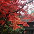 写真: 平林寺