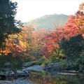 写真: 嵐山渓谷