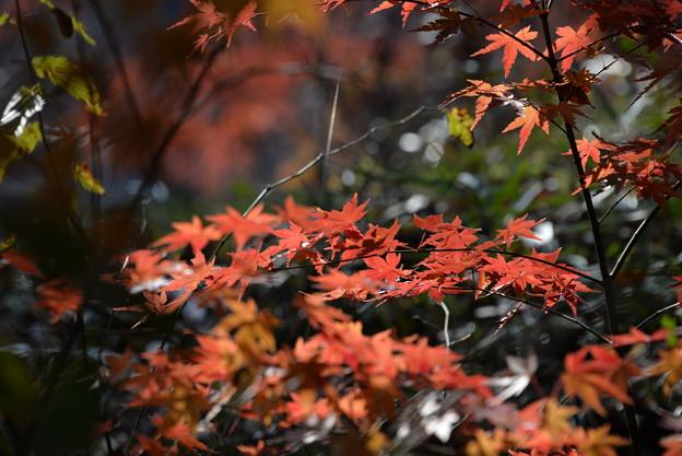 写真: 秋色(武蔵嵐山)