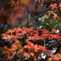 秋色(武蔵嵐山)