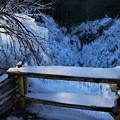 写真: 氷柱