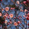 Photos: ほんのりピンク