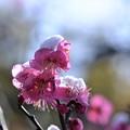 Photos: 三寒四温