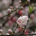 Photos: 『恋に夢中』