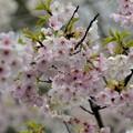 Photos: ピンクと白