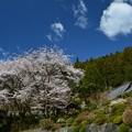 Photos: 慈光寺の桜