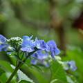 Photos: 梅雨入り