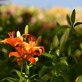 Photos: オレンジ