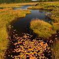 初秋の池塘