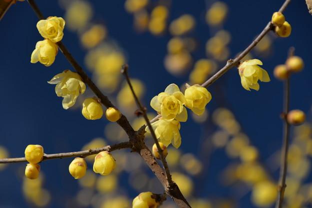 Photos: 黄色には・・・