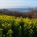 Photos: 春が来た?