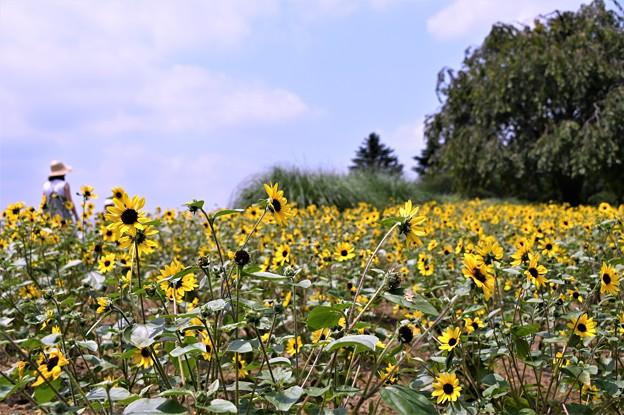 Photos: 夏日