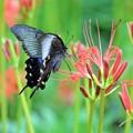 Photos: 蝶と花?