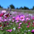 Photos: 花の丘2