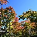 Photos: 秋の庭園