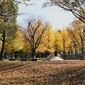公園の黄葉