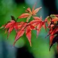Photos: 赤と緑