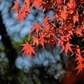 朱に染まる(昭和記念公園)
