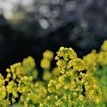 Photos: 春よ来い?