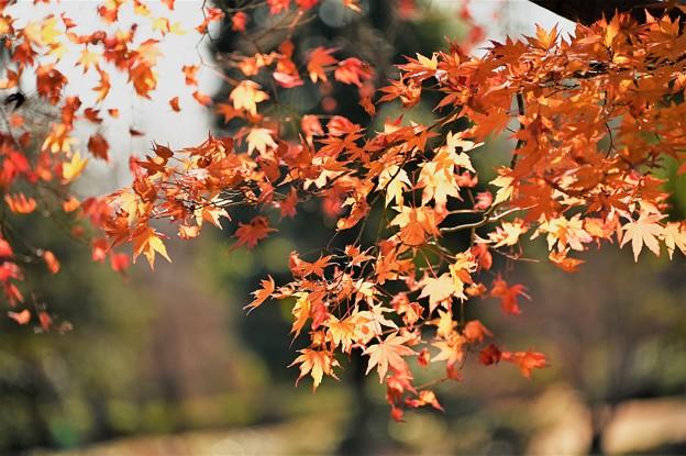 最後の秋色