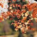 Photos: 最後の秋色