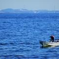 Photos: 海に生きる
